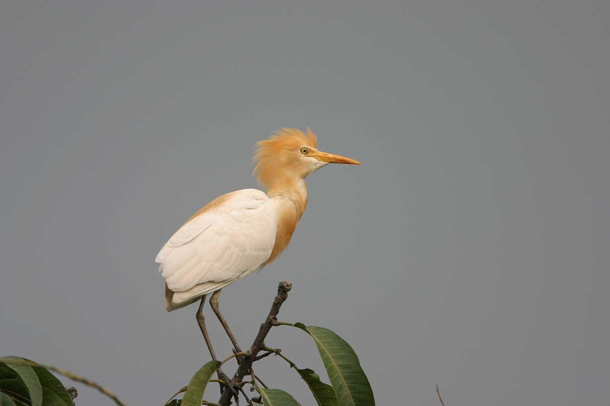 Birds in Bhutan